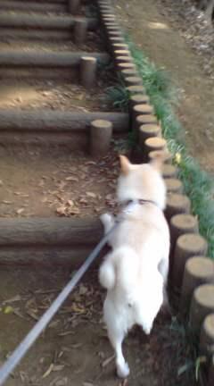 お散歩(o^-^o)