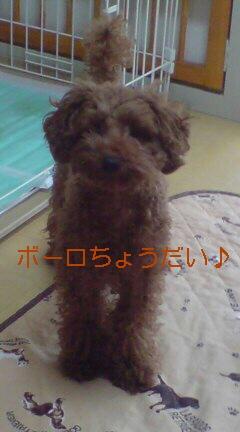 おしっこ(o<br />  ・v・o)