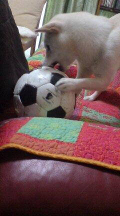 ハナとサッカーボール