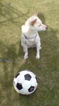 ハナ、サッカーに夢中♪