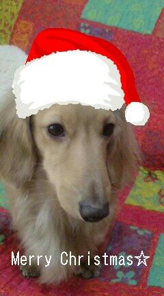 メリークリスマス☆☆