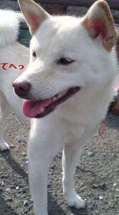 この笑顔(<br />  ^-^)<br />  ノ