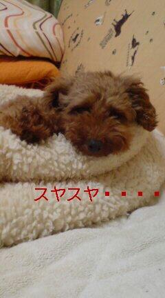 スヤスヤ〜〜(u_u)o<br />  〃
