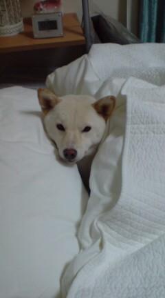 ハナのベッド